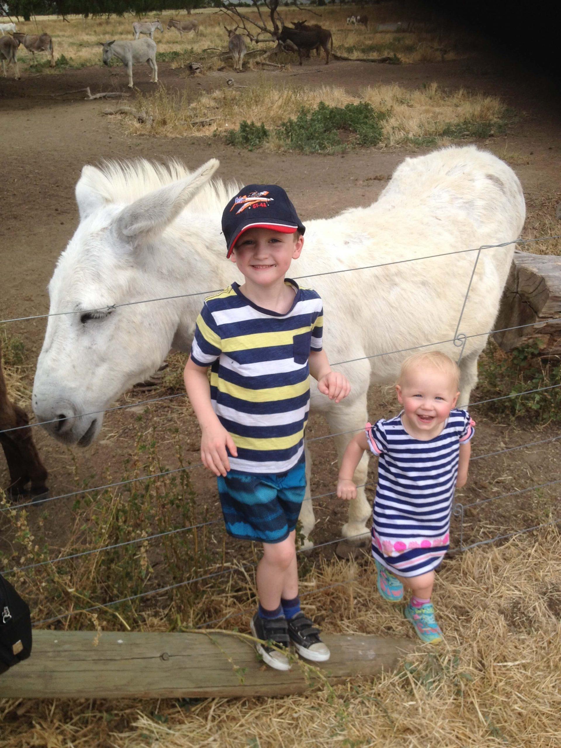 Donkey Day 2